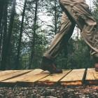Articol audio – Cultura antreprenoriatului